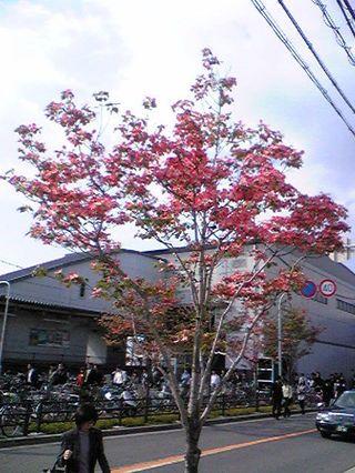 Hanamizuki2009