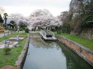 近江牛&蹴上の桜