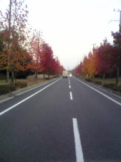 紅葉の街路樹