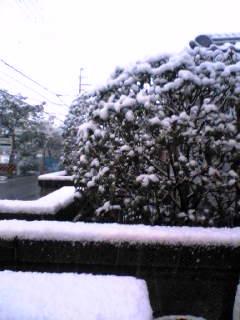 今朝は積雪5cm
